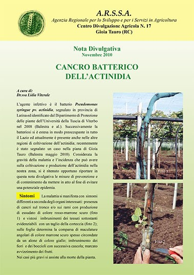 cancro batterico actinidia