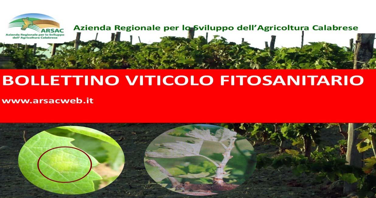 Bollettino viticolo fitosanitario