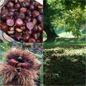 biodiversità calabria