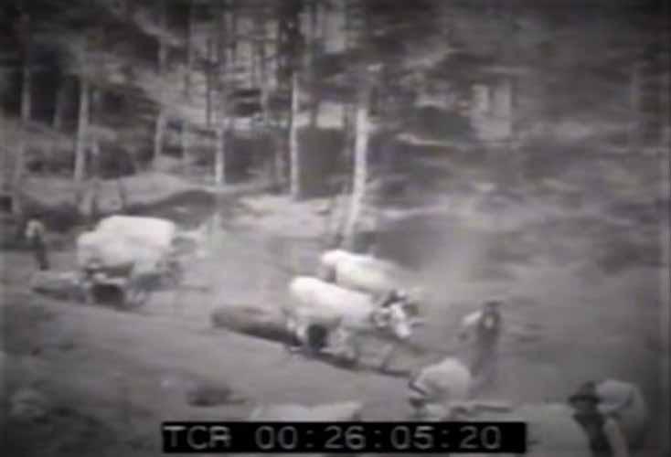 Il trasporto del legname mediante i buoi, dai luoghi di taglio a quelli di accumulo nelle montagne di Petilia Policastro