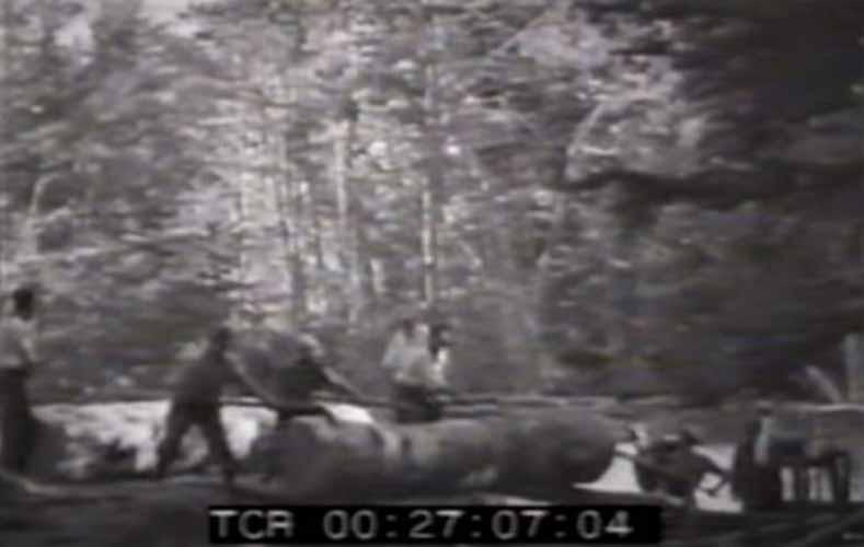movimentazione del legname su carrelli ferroviari nelle montagne di Petilia Policastro