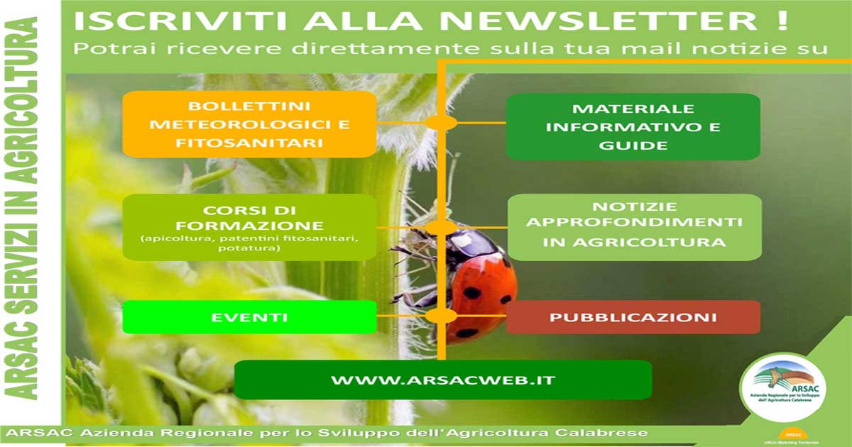 newsletter arsacweb