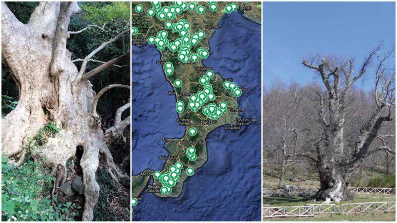 alberi-monumentali-calabria-web-home