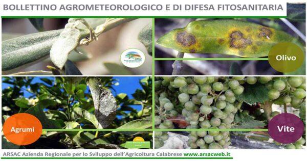 bollettino 2021-fitosanitario-web