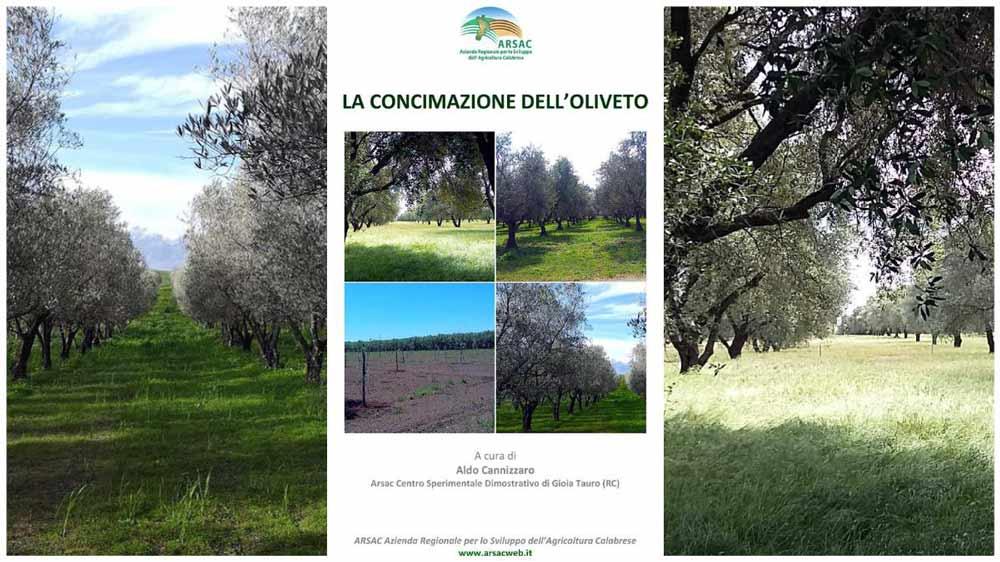 concimazione oliveto
