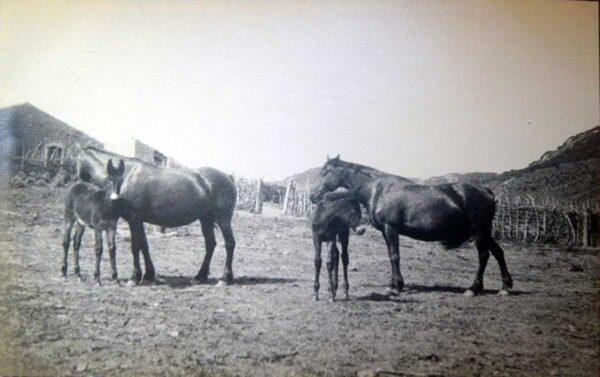 012-cavalli-home