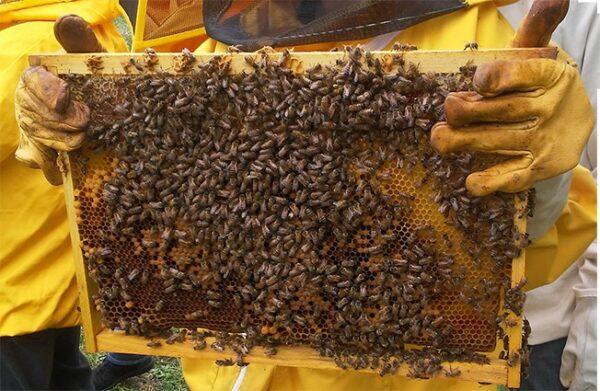 apicoltura corso
