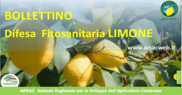 banner bollettino limone_ arsac ok